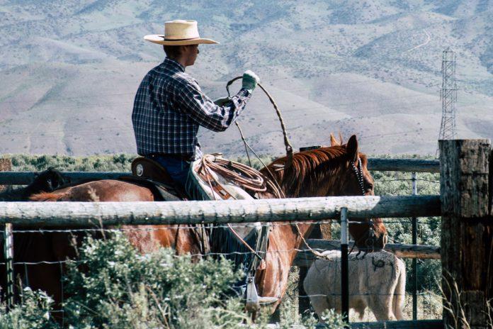 Cowboy på sin hest med en pisk